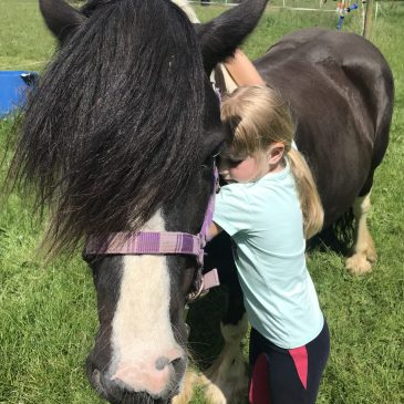 Our beautiful pony Winnie