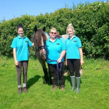 From Parties to Pony Assisted Learning – Hooves for Healing